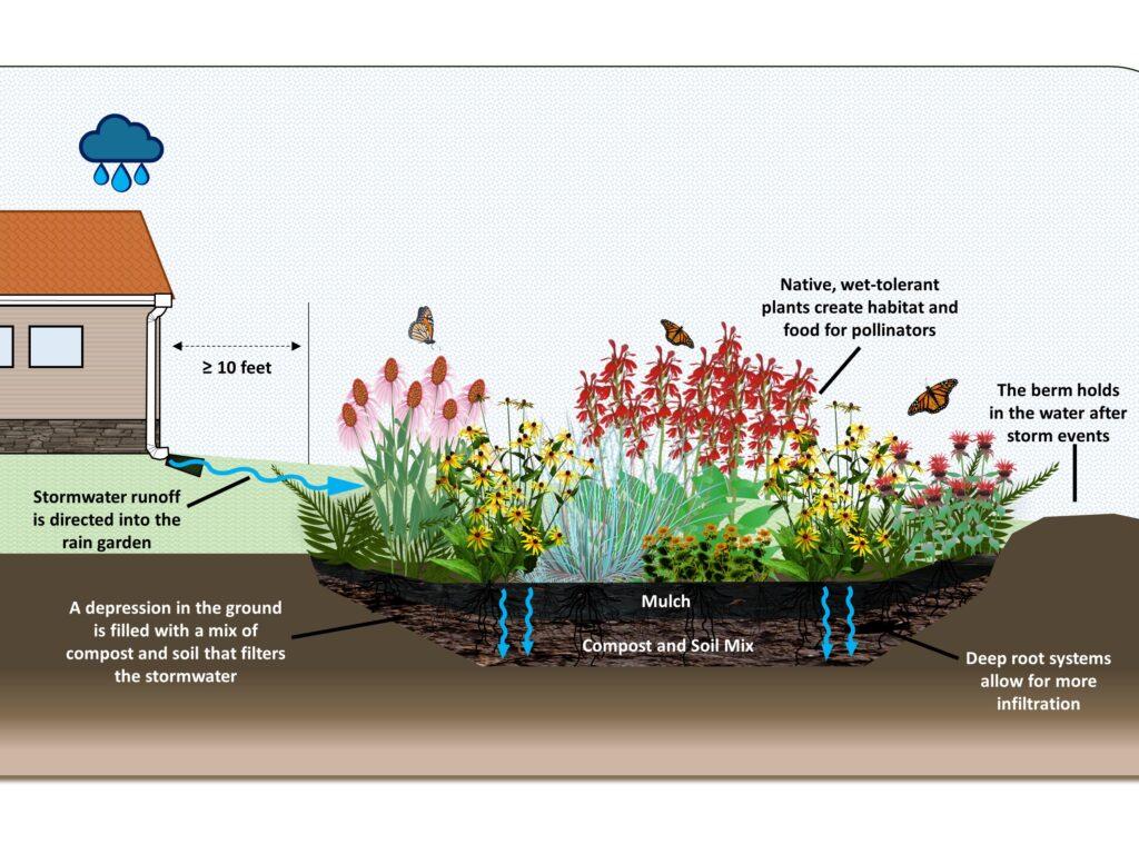 Rain garden graphic